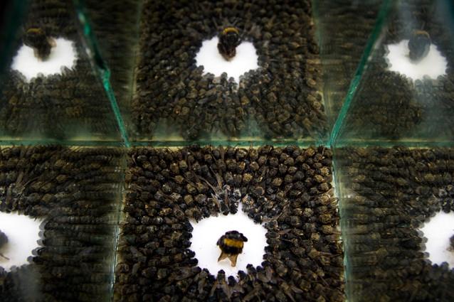 Bee and Flies (3)