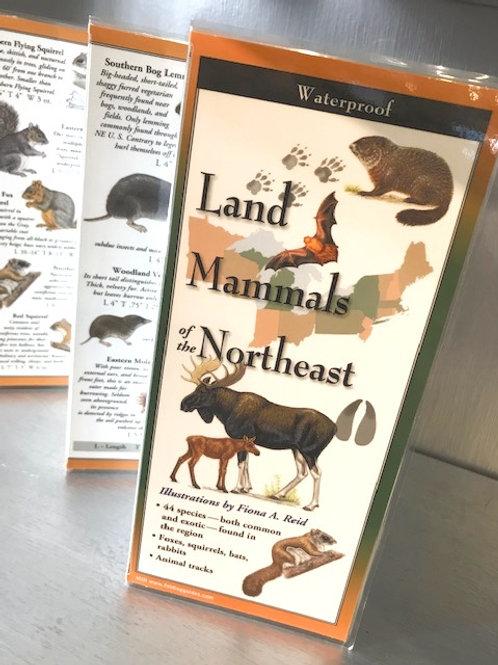 Land Mammals of the Northeast