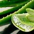 Alvejas jeb Aloe veras vērtīgās uzturvielas un dziednieciskais spēks.