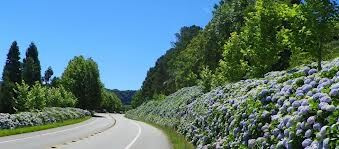 Estrada Serra Gaúcha.jpg