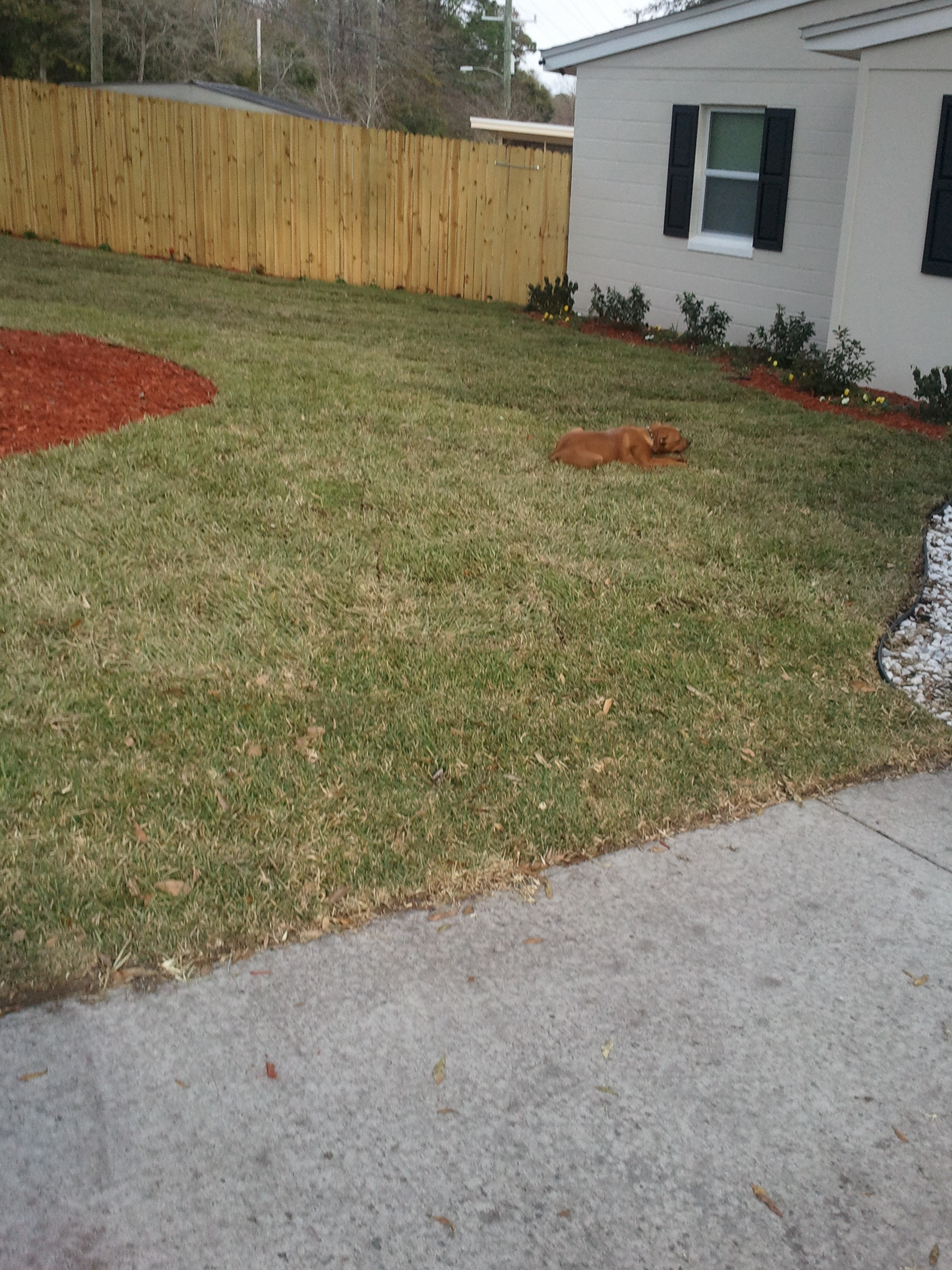 sod replacement