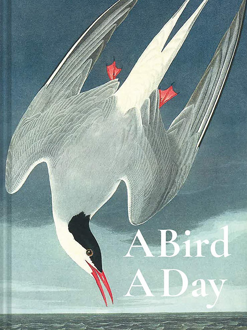 A Bird A Day Book