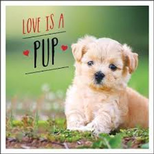 Love Is A Pup