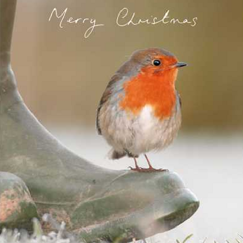 Robin's Winter Morning Christmas Card Pack of 5
