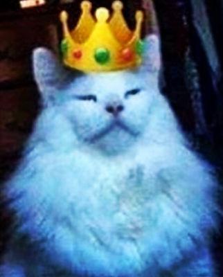 cat crown.jpg