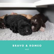 bravo and romeo