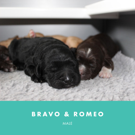 bravo and romeo