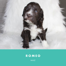 Romeo week 4.jpg