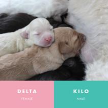 delta and kilo