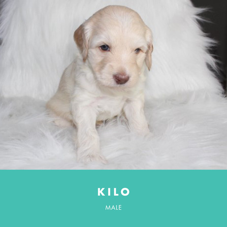 Kilo Week 4
