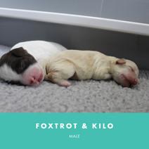 foxtrot and kilo