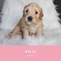 delta Week 4.jpg
