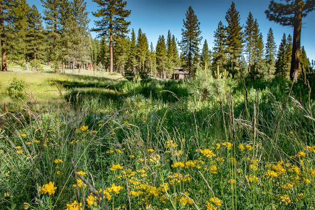 meadow-flowers.jpg