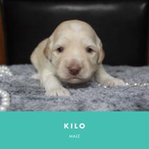 kilo week 3.jpg