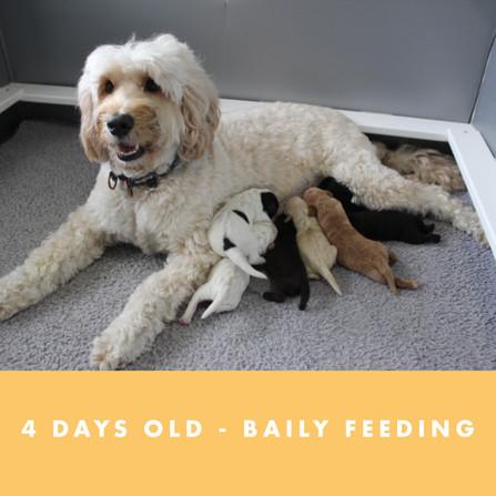 BAILEY FEEDING 4 DAYS OLD