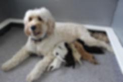 Bailey Feeding Pups Day 4.JPG