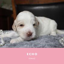 echo week 3.jpg