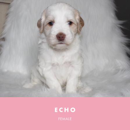 Echo Week 4