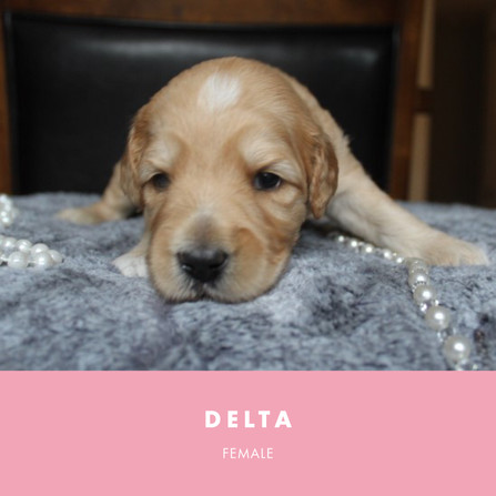 delta week 3.jpg