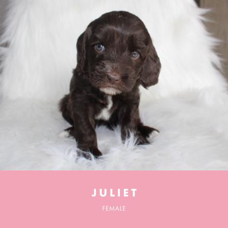 Juliet Week 4.jpg