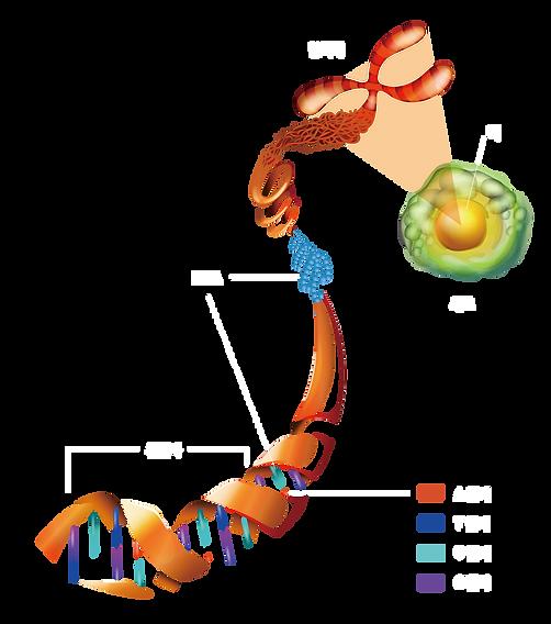 수정 이미지 0. DNA.png