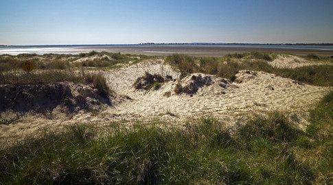 13 Thorney Island dunes and Pilsey Sand.