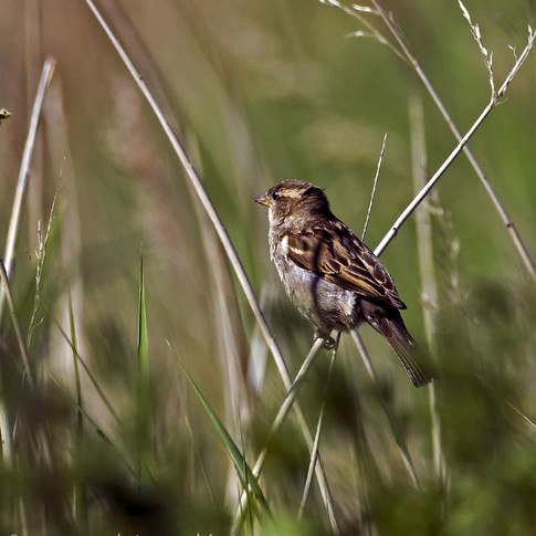 One in the reeds