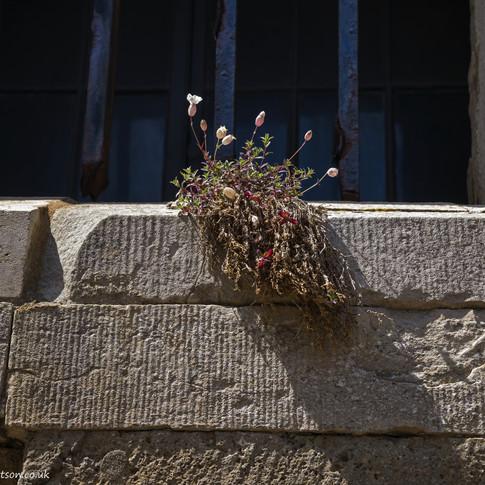 c Wild flowers on granite sill.jpg