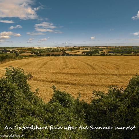 Oxforshire field in Summer