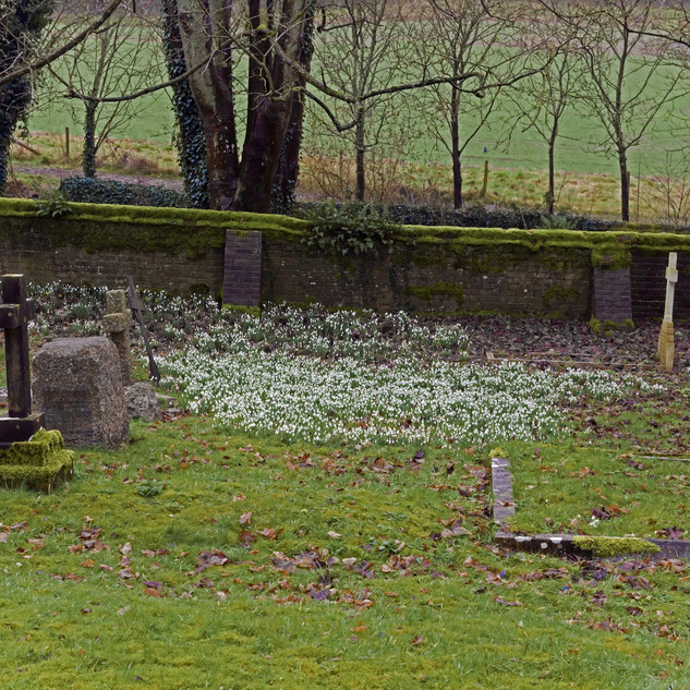 Snowdrops in St. Mary's Churchyard, Buriton