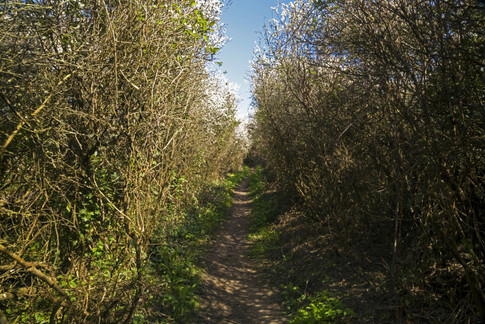 10 The path to Longmere Point.jpg