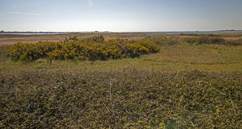 11 View over Pilsey Island.jpg