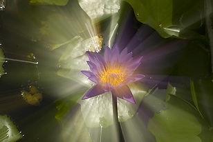 Nature'sEnergyFlickr copy_edited.jpg