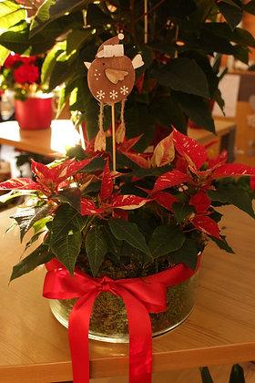 Stelle di Natale bicolore