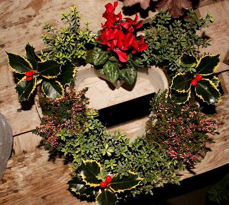 Composizione mista con piante invernali