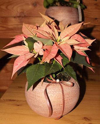 Composizione con Stella di Natale rosa