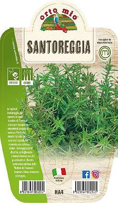 SANTOREGGIA V.14