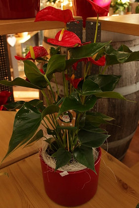 Composizione con Anthurium rosso