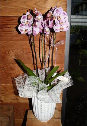 Composizione con orchidea Phalaenopsis
