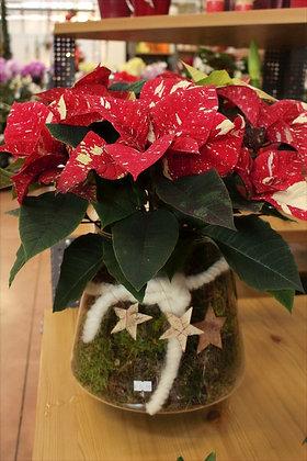 Stella di Natale bicolore grande