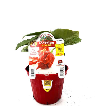 PPEPERONCINO SCORPION ROSSO SUPER HOT 1PZ