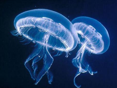 Picaduras de medusa ¿Qué hacer?