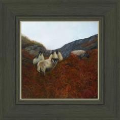 Highland Rams