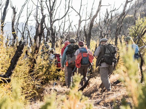 Reforestar la Patagonia