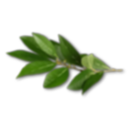 Leaf%202_edited.png