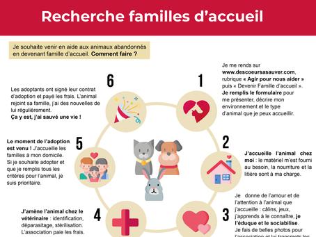 Recherche Familles d'Accueil Chats, chiens, lapins - 74
