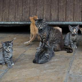 Post-confinement : prolifération des chats errants, les associations débordées !