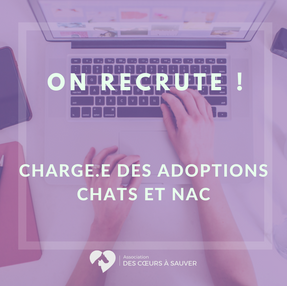 On recrute: chargé adoptions chats/NAC!