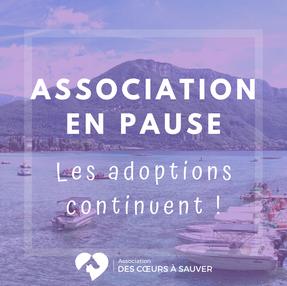 ASSOCIATION EN PAUSE, les adoptions continuent !