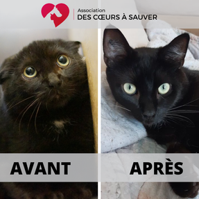 À la rencontre de Sandrine: famille d'accueil pour chats sauvages